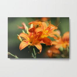 Day Lily Dance Metal Print