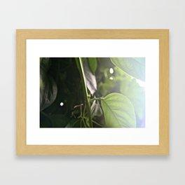 Soft focus Framed Art Print