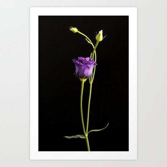 Lonely Lisianthus Art Print