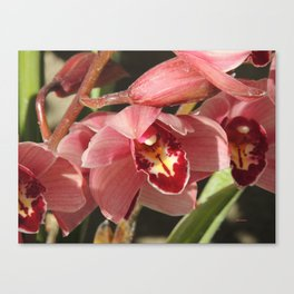 One Orchid on a Line Canvas Print