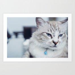 grumpy blue cat Art Print