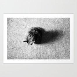 Aesthetic Black And White Cat 2 Art Print