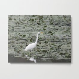 Egrt at John Heinz Wildlie Refuge a Tinicum Metal Print