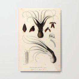 Christophe Annedouche - Common octopus (Octopus vulgaris) 1845 Metal Print