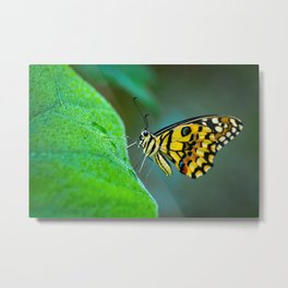 Butterfly , cute insect with multicolor colored wings sitting on green leaf on natural background. W Metal Print