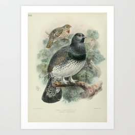 Vintage Print - A History of the Birds of Europe (1881) - 705 Ural Capercaillie Art Print