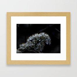 Apple Blossum Framed Art Print