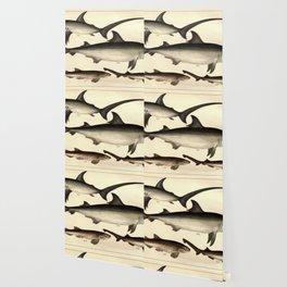 Vintage Shark Illustrative Diagram (1901) Wallpaper