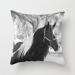 Stunning Gypsy Vanner Throw Pillow