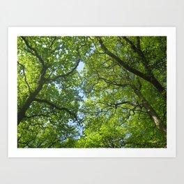 New Forest Beech Canopy Art Print