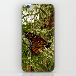 Feeding butterfly iPhone Skin