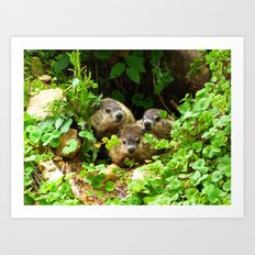 Cuteness Overload Featuring Three Young Groundhogs Art Print