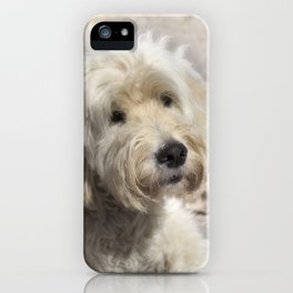 Dog Goldendoodle Golden Doodle iPhone Case