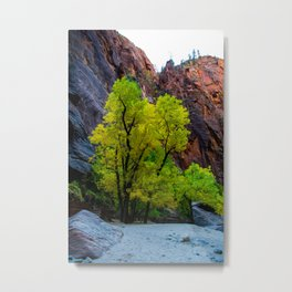 Fall Colors in Zion National Park Metal Print