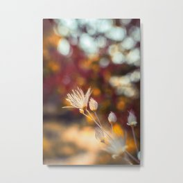 A Little Glow wildflowers in the Fall Metal Print