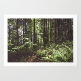 Woodland - Landscape and Nature Photography Art Print