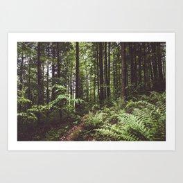 Woodland - Landscape and Nature Photography Kunstdrucke
