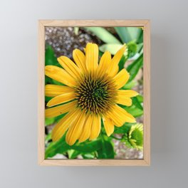 Yellow cone flower Framed Mini Art Print