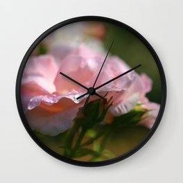Raindrops on the Pink Rose Petals in the Sun Wall Clock