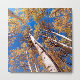 Aspen Trees Against The Sky In Crested Butte, Colorado Metal Print