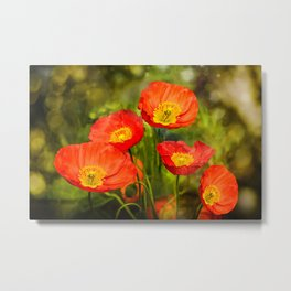 Little red poppies Metal Print