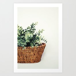 Plant On White Art Print