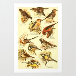 William Playne Pycraft - A Book of Birds (1908) - Plate 26: Some Perching- or Song-birds Art Print