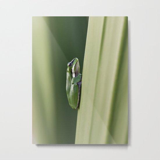 Dwarf Green Tree Frog Metal Print