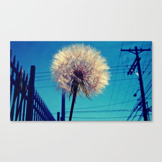 Dandelion rising Canvas Print