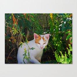 Yellow eyed cat Canvas Print