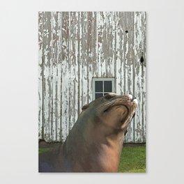Photobomb at the Barn Canvas Print