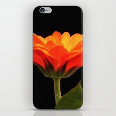 Marigold iPhone & iPod Skin