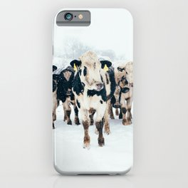 Cows in Winter on a Farm iPhone Case