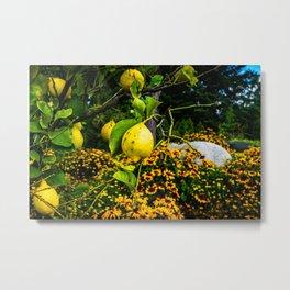 LemonTree Metal Print