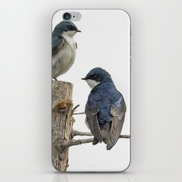 Tree Swallow Times Two iPhone Skin