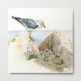 Seagull  - nesting bird on the Ligurian coast Metal Print
