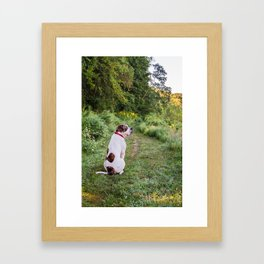 Wingfield Pines - Dog Framed Art Print
