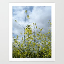 Mustards Art Print