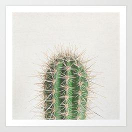 Cactus Kunstdrucke