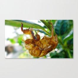 Cicada Shell Canvas Print