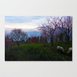 Sheep and Sunsets Canvas Print