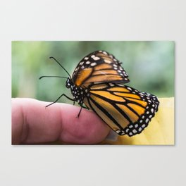Shake my hand Canvas Print