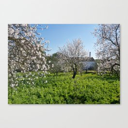 Almond trees in Portugal Canvas Print