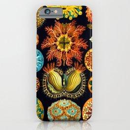 Sea Squirts (Ascidiacea) by Ernst Haeckel iPhone Case