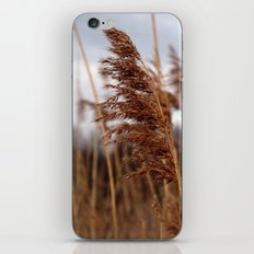 stay in the wind. iPhone Skin