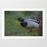 A duck of many tales Art Print