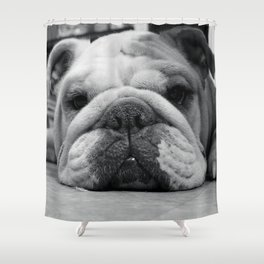 Black and White English Bulldog Photography Shower Curtain
