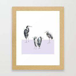 Are these herons or storks? Framed Art Print