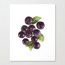 Acai Berry Canvas Print