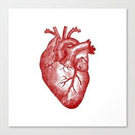 Vintage Heart Anatomy Canvas Print